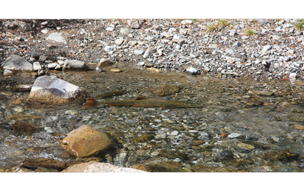Habitat Restoration Design for Hidden Creek and Girardi Creek: Hatfield selected to implement two Alberta Environment and Parks FISHES Program projects.
