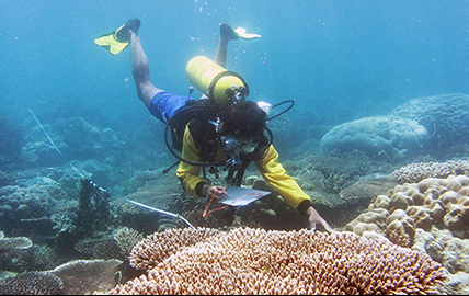 PT Hatfield Indonesia and WWF Collaborate to Develop Sustainable Tourism in the Coral Triangle