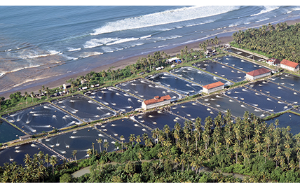 PT Hatfield Indonesia Launches New Services to Assist Indonesian Shrimp Farmers Achieve Aquaculture Stewardship Council Certification