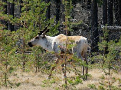 Forest Disturbance and Restoration Data Development for SERNbc