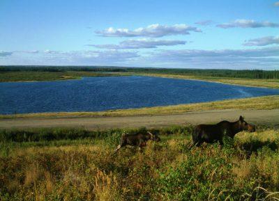 JPM1 Compensation Lake Monitoring Program